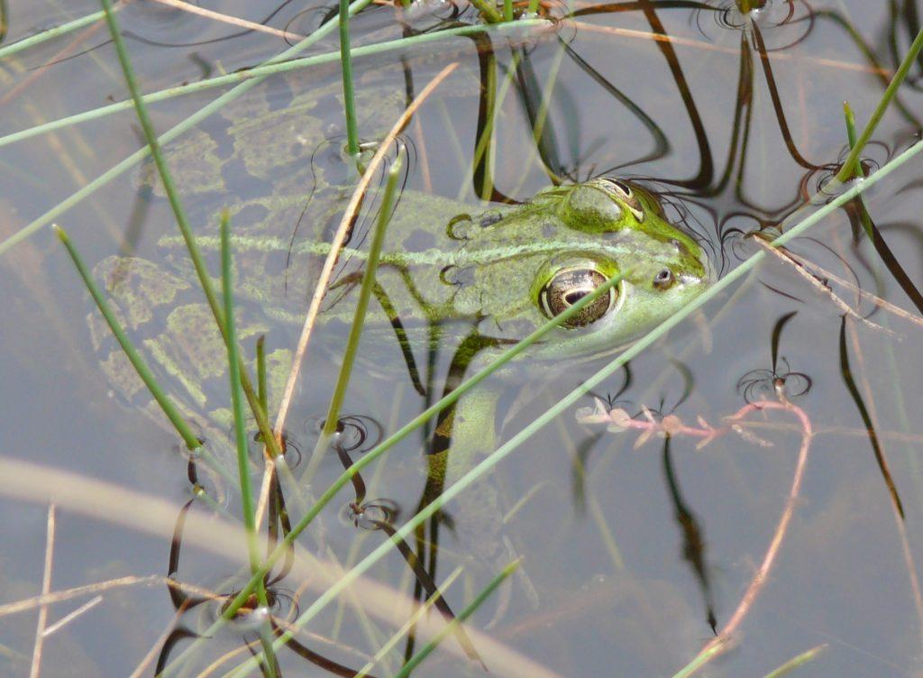 Biodiversité aquatique et semi-aquatique